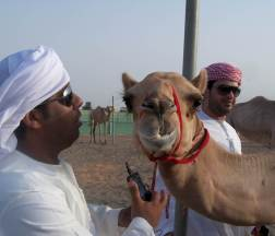 At the camel farm