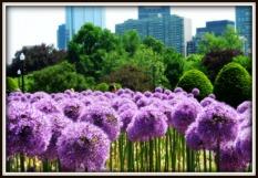 boston-in-bloom